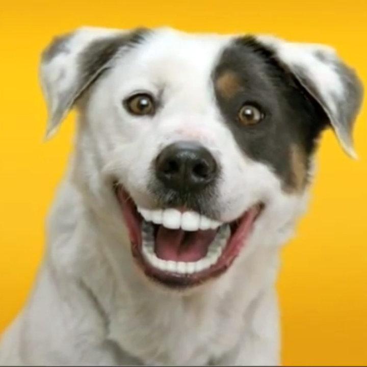 laughing-dog.jpg